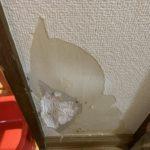 犬による壁の傷跡