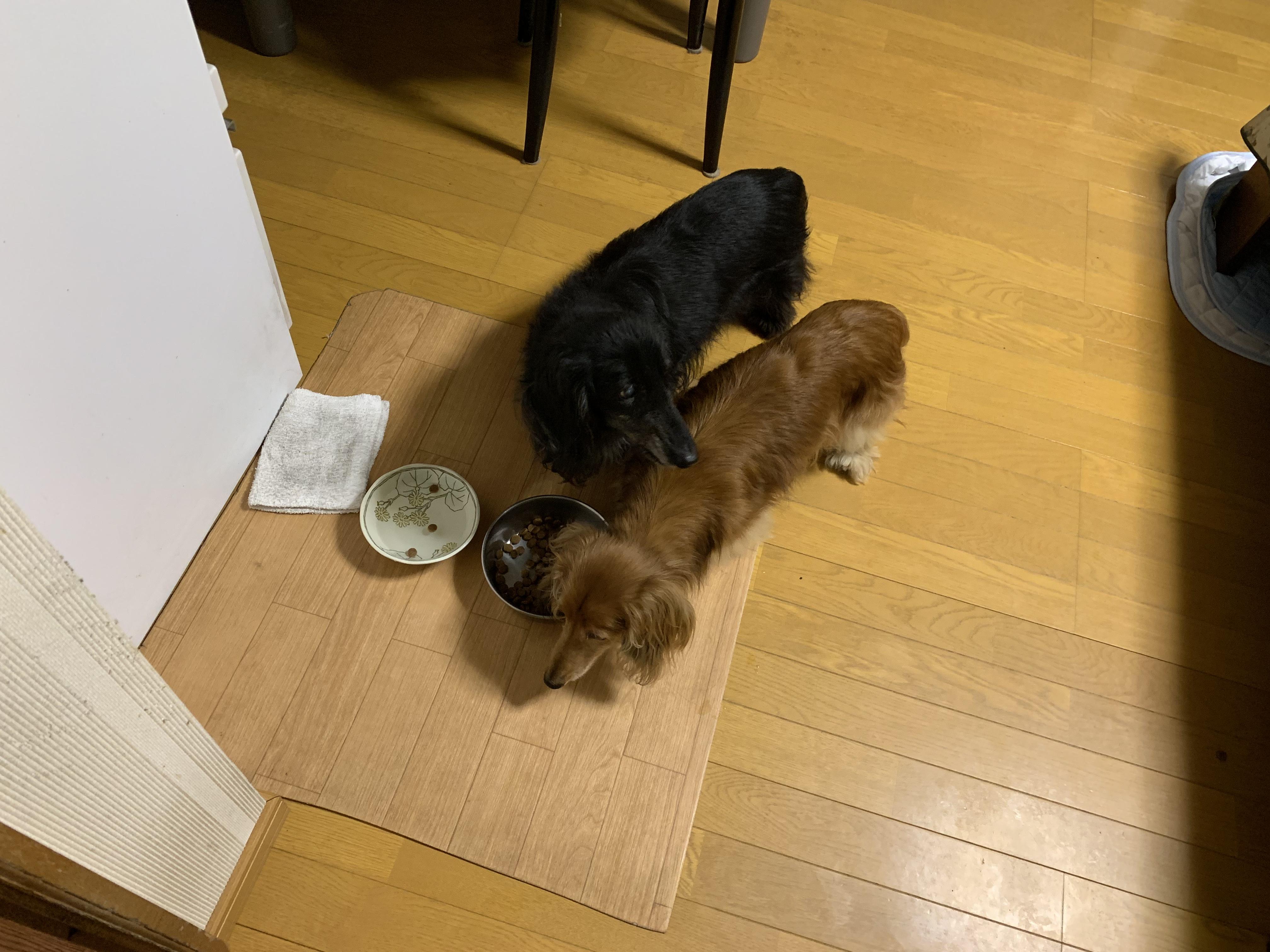 元気に餌を食べる犬たち
